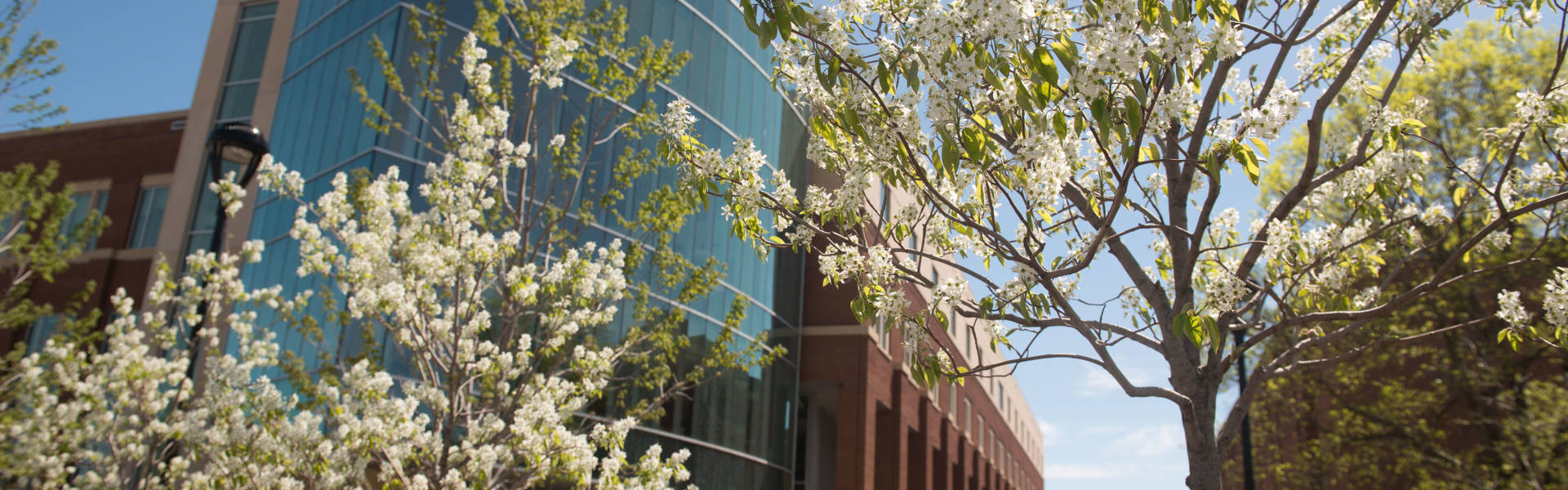 Lower campus beauty during the spring.