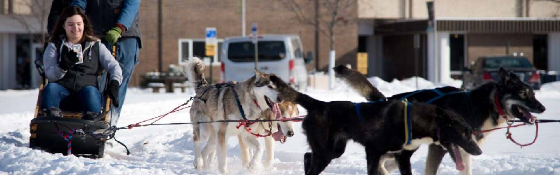 Sled dogs by residence halls for Winter Carnival