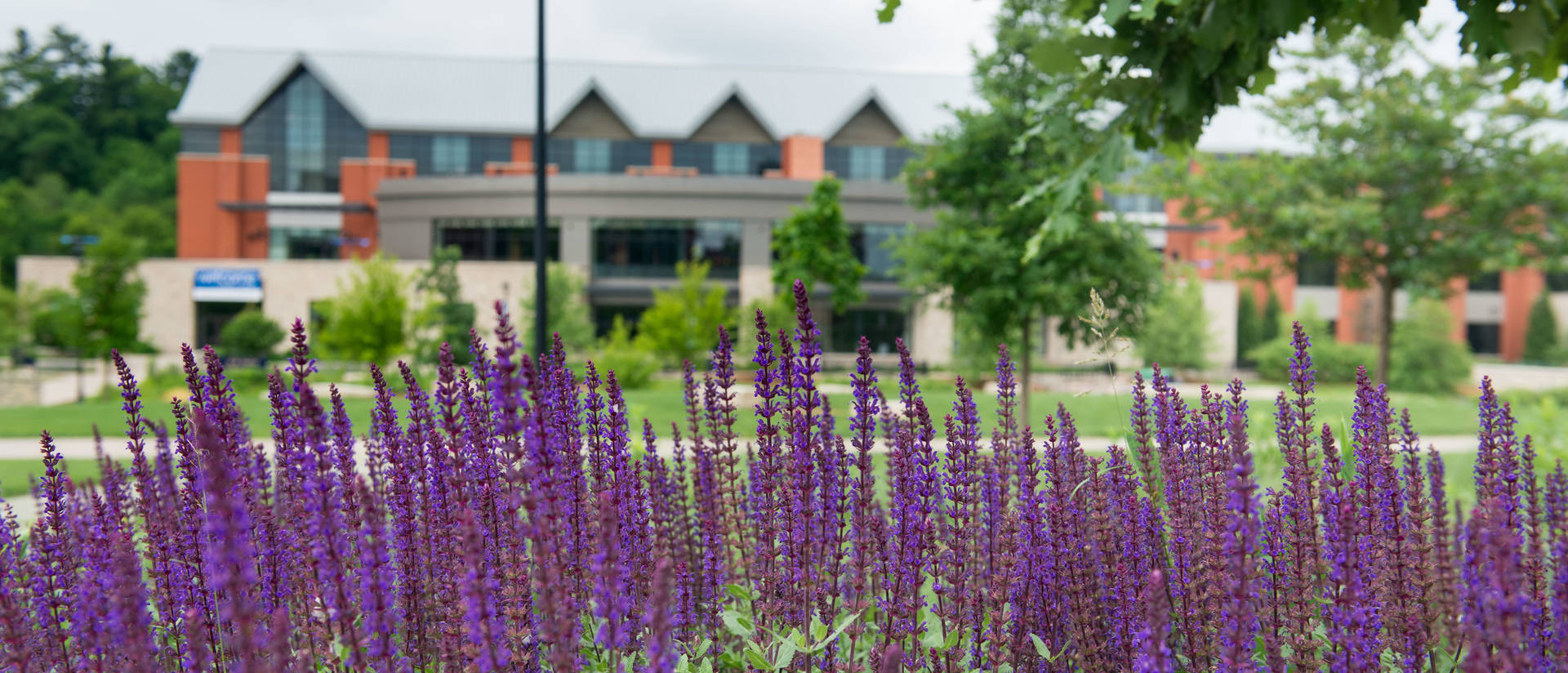 flowers on campus mall with Davies in background