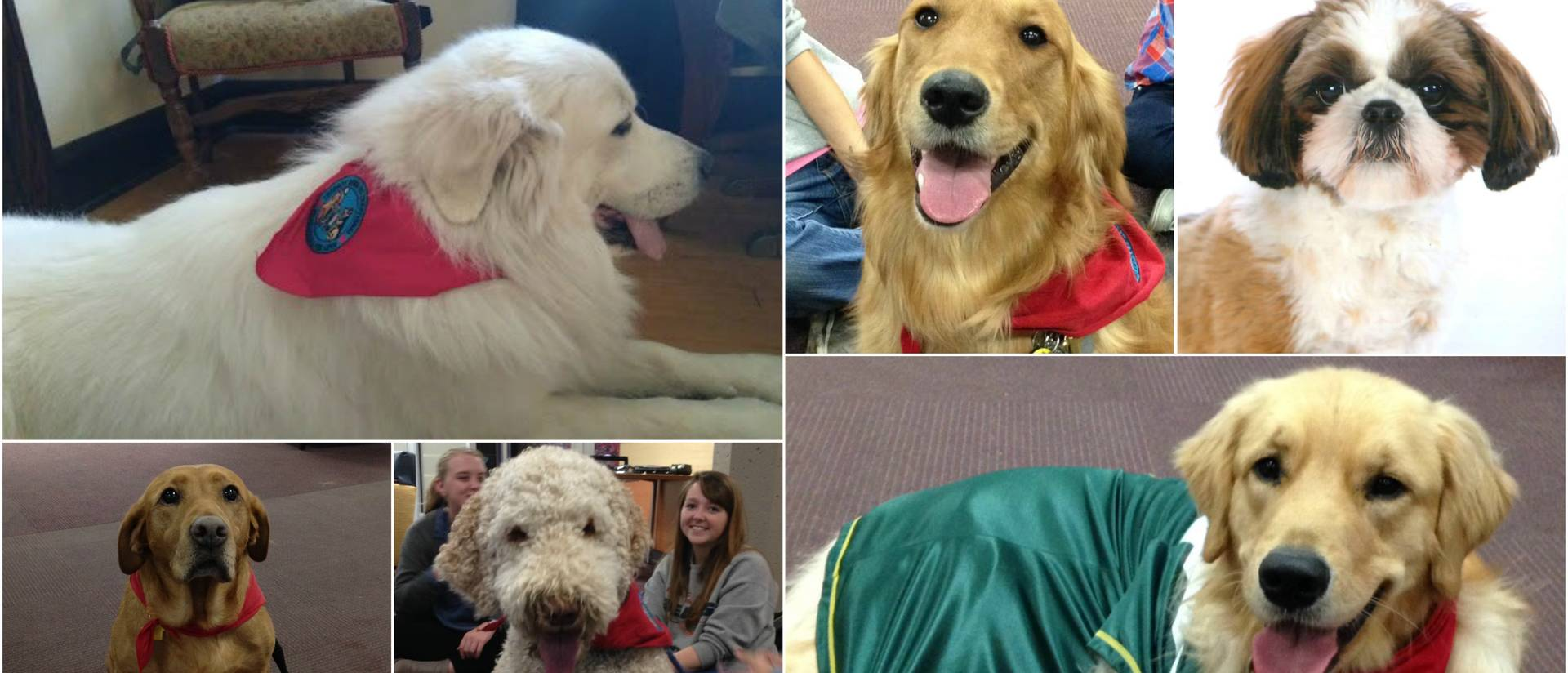 Therapy Dog Collage