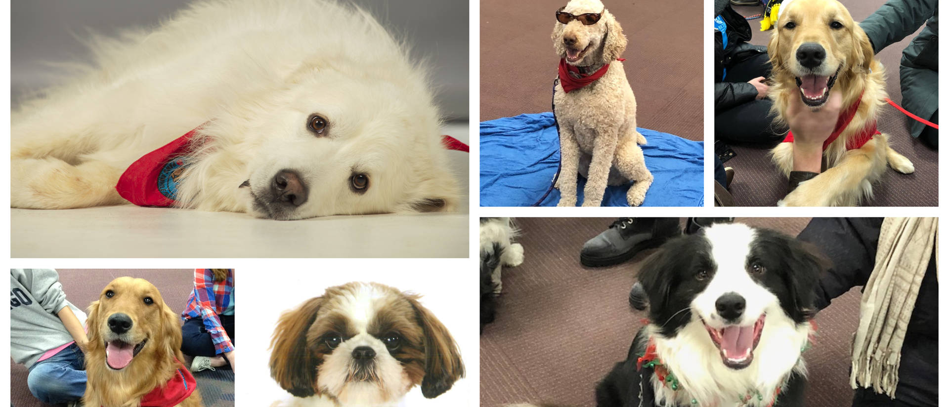 Collage of therapy dogs