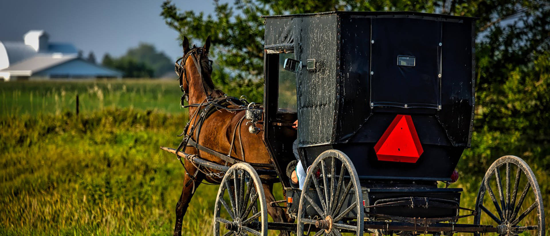 Horse pulling Amish buggy along highway