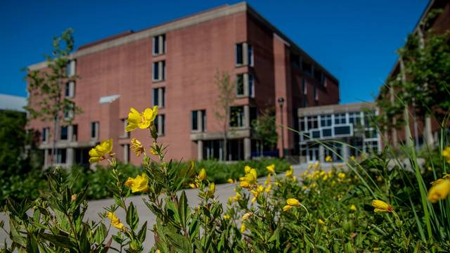 McIntyre library building in the background with a close up of yellow flowers in the foreground