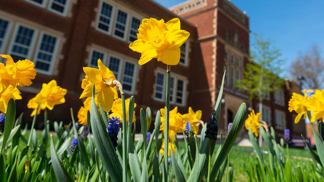 Daffodils outside Schofield Hall