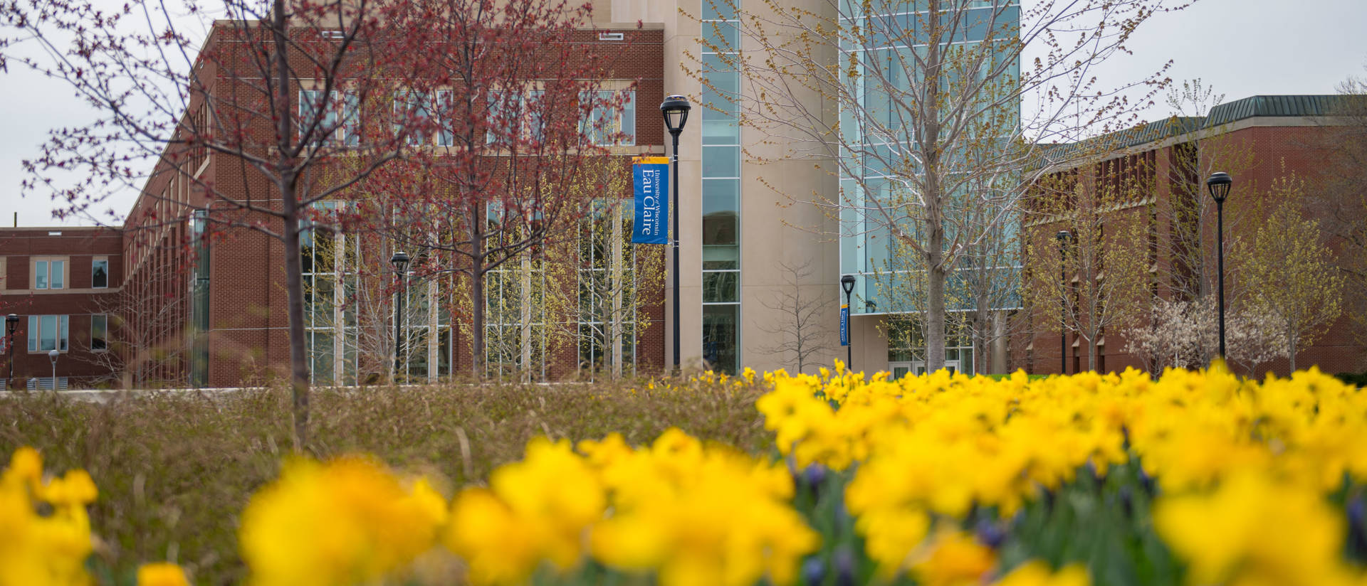 Centennial with daffodils