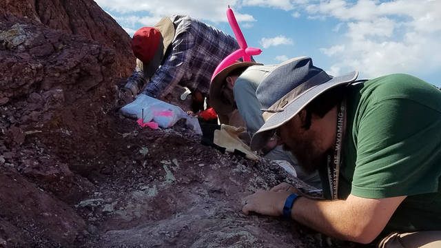 Dr. Dave Lovelace works with students Calvin So (left) and Aaron Kufner (right) on a Late Triassic fossil assemblage near Dubois, Wyoming, in 2017.