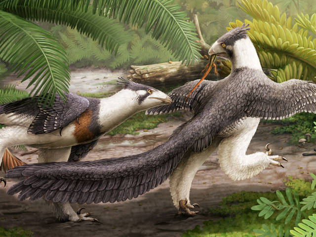 Hesperornithoides miessleri by Gabrielle Ugueto, a life reconstruction of the fossil specimen known as