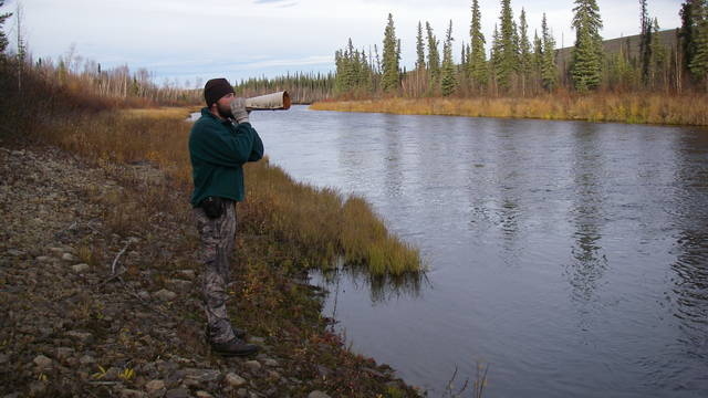 "Alaska hunting guide Billy Molls, who will discuss his adventures during the Oct. 22 ""Thursdays from the U"" livestream, mimics the sounds of a cow moose in hopes of luring a mature bull."