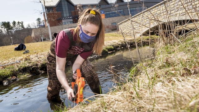Female student collecting research samples in Little Niagara Creek on lower campus