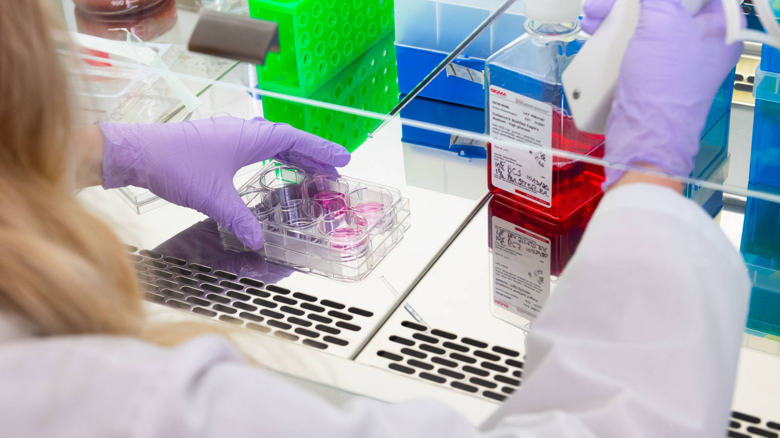 Genetics research in lab