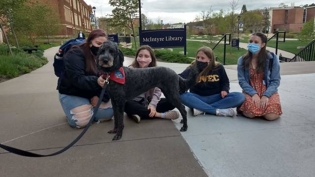 Therpay dog and students outside library