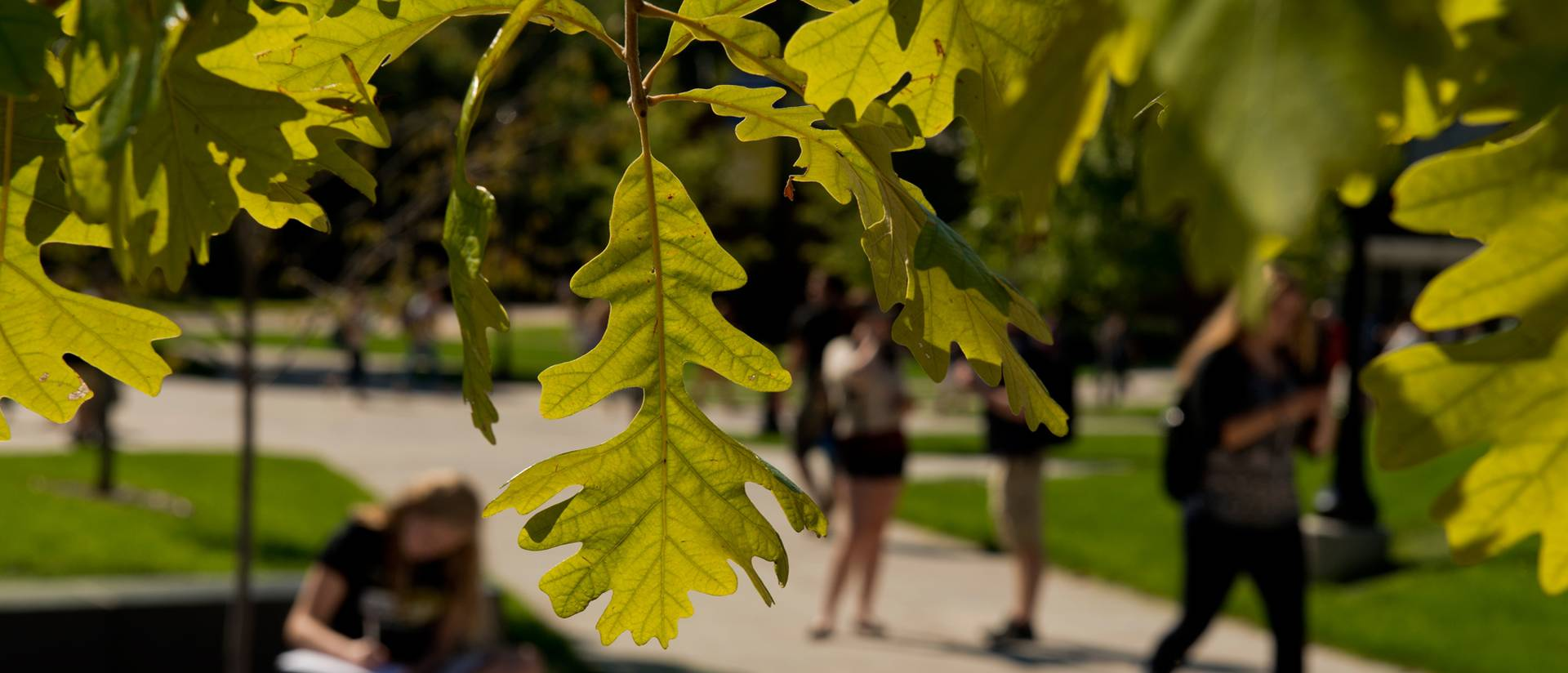 Students walking, studying on campus mall