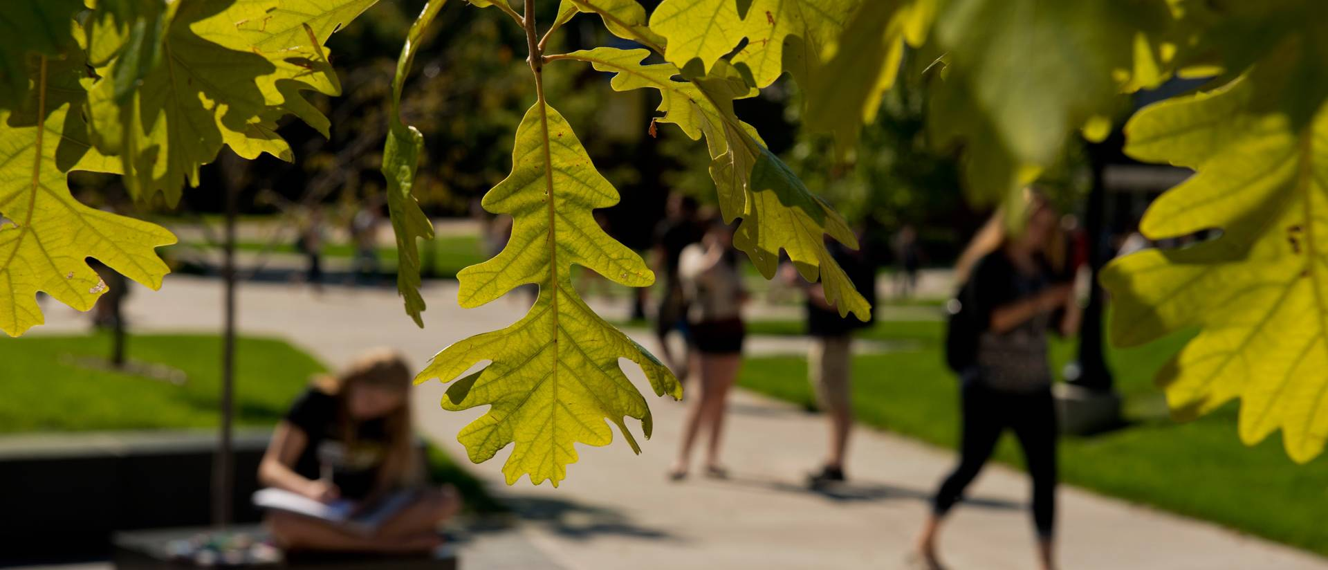 students on campus mall