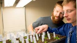 UWEC Biology professor and student doing research