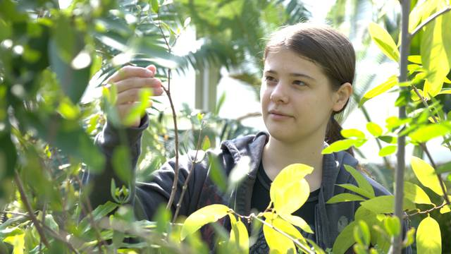 UW-Eau Claire biology student inspecting leaves on a plant in one of our three greenhouses on campus