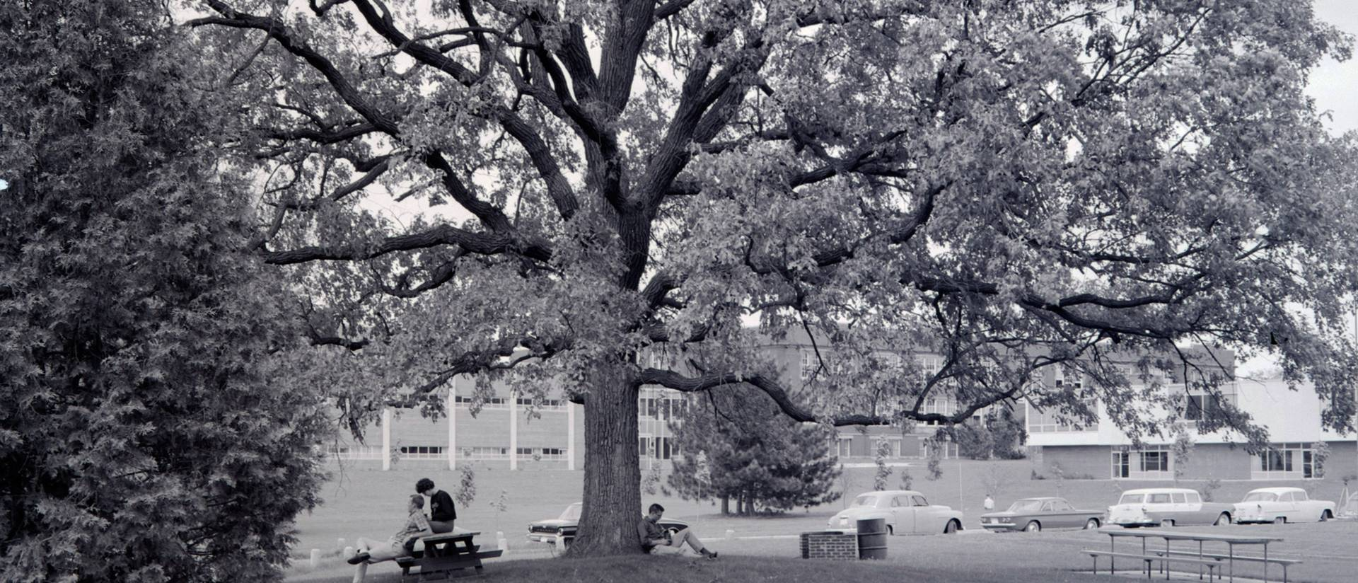 Council Oak tree at UW-Eau Claire