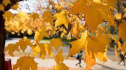 Fall leaves on UW-Eau Claire campus