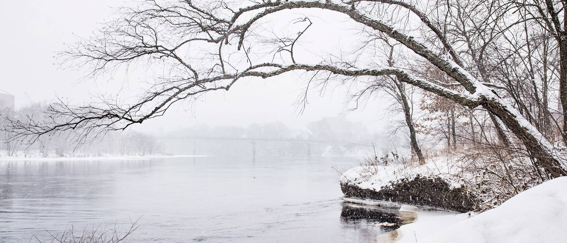 Snowy tree hanging over the Chippewa River