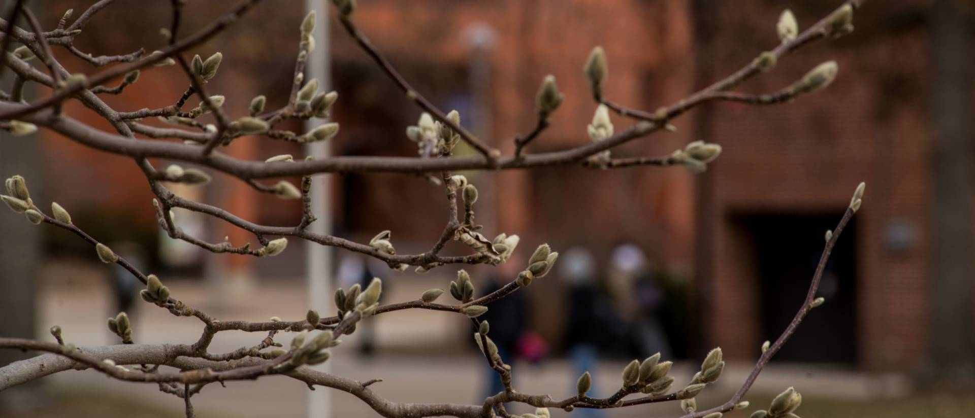 campus scene through budding tree branches