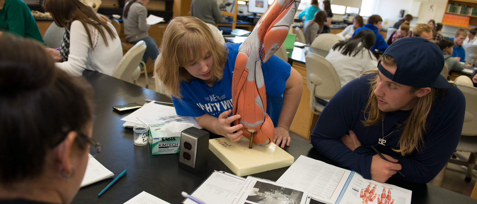 Biology students studying a model of the human leg