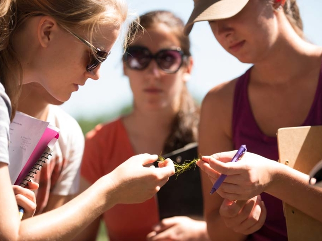 Biology students studying plant life in a field biology research setting