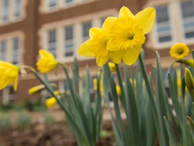 Spring campus shot with flowers.