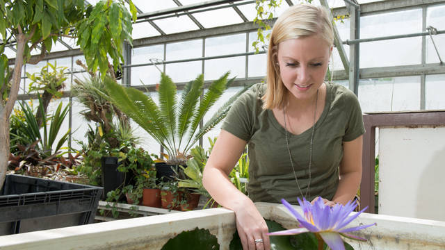 Student tending the greenhouse.