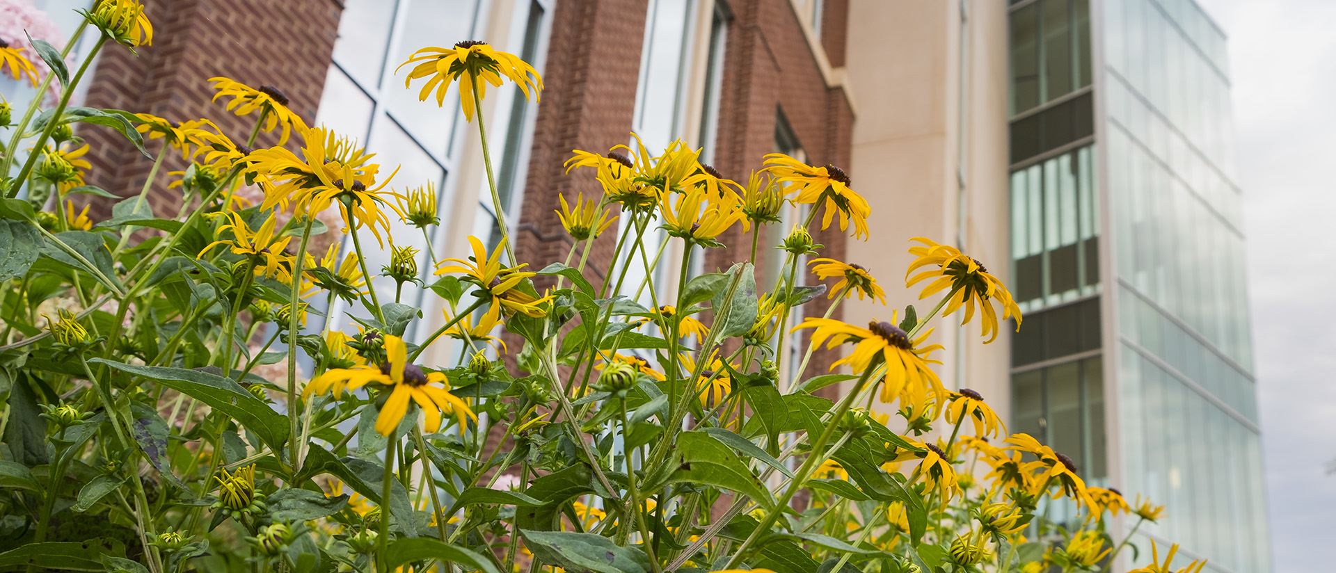 Flowers outside Centennial Hall