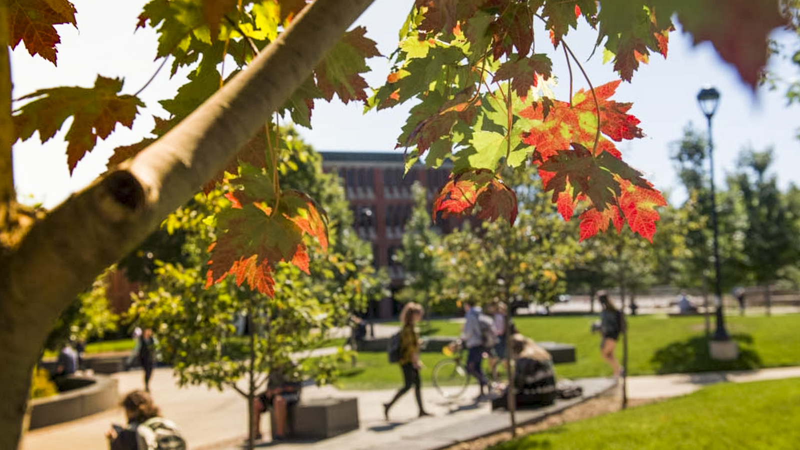 campus mall in fall 2017