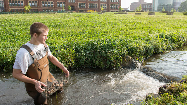 UWEC Students Collect Crayfish near Minnie Creek