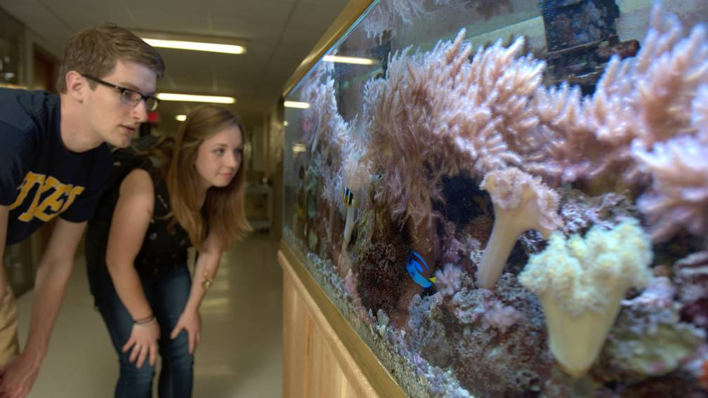 Biology students checking out the marine life inside one of our 125-gallon tanks
