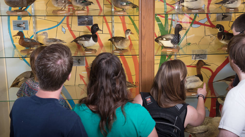 Biology students look at James Newman Clark Bird Museum exhibit