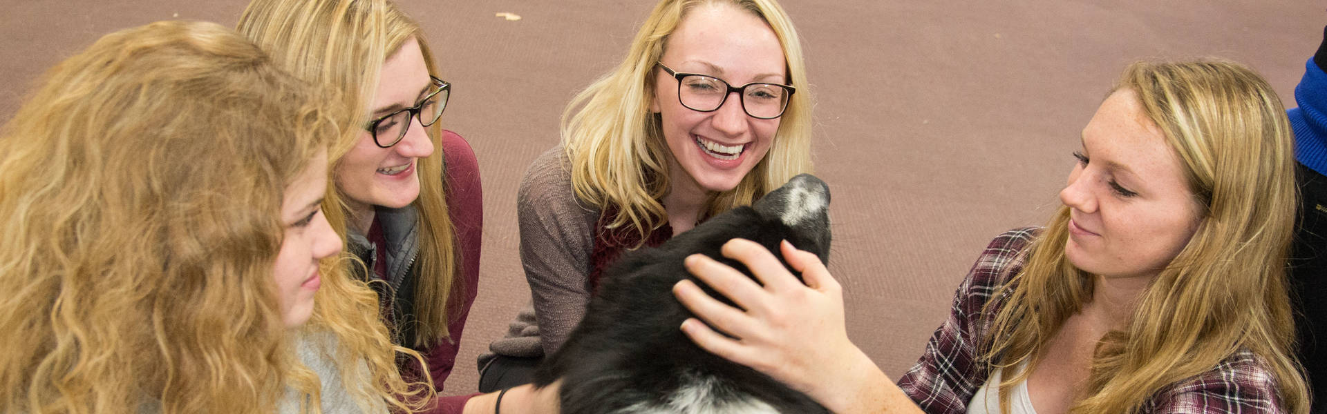 Finals Week therapy dogs in library.