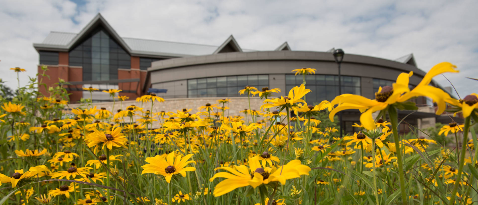 Summer flowers bloom on the lower campus of UW-Eau Claire.